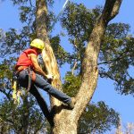 Tree Surgeon in Preston
