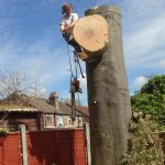 tree felling in Wigan