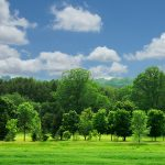 Tree Thinning in Leyland