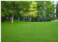 Professional Lawn Care Service in Ormskirk